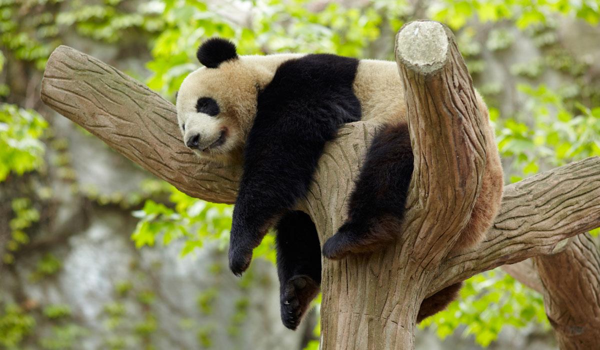 Dolžina spanja živali